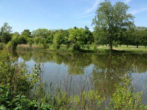 Fresh Pond 3