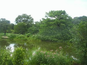 Fresh Pond 2