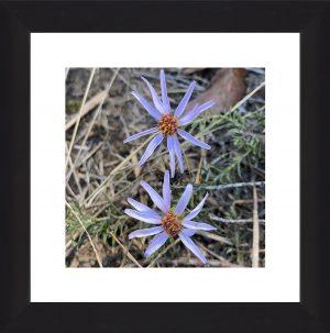 Wayland Wild Flowers