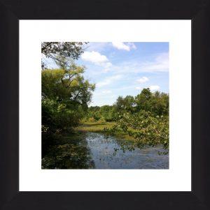 Fresh Pond 1