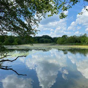 fresh pond 2021