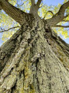 tree 2021